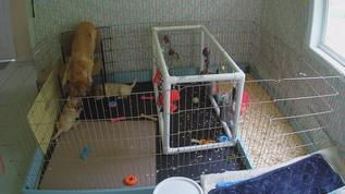 Maya teases her pups!