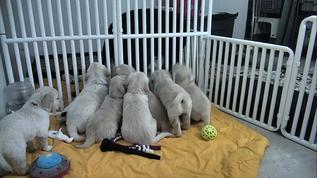 Dawn's pups wants some of what Ann is giving to her pups.