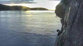 good evening cormorant on PI