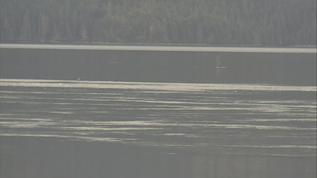Orca on pi