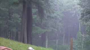 Zen rain showers on Puppy Hill