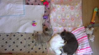 Bubbles and Buttercup kitty yin-yang