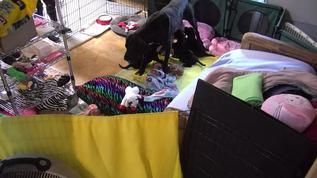 Lainee feeding her pups :)