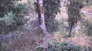 Deer at base of tree.