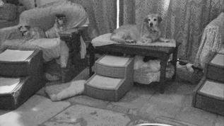 Cowboy,Sassy and Lucy still awake